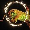 Цирки в Калаче-на-Дону