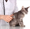 Ветеринарные клиники в Калаче-на-Дону